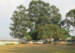 Kasiisi School